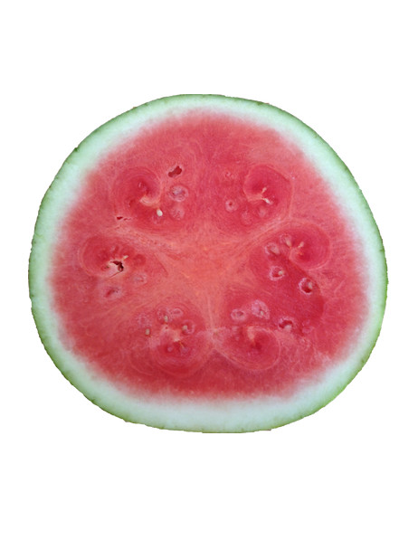 watermelon-middle